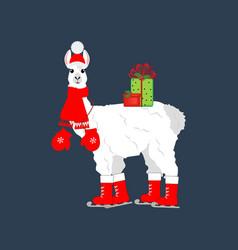 Llama on skates vector
