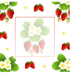 Red strawberry and flower banner on white vector
