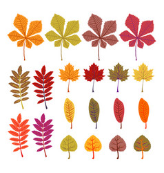 autumn leaves yellow foliage set season of vector image