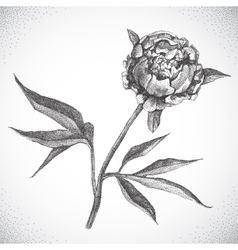 Flower Black and white Dotwork vector image