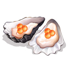 Oyster on white background vector