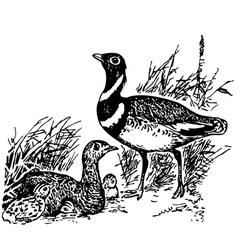 bird little bustard vector image
