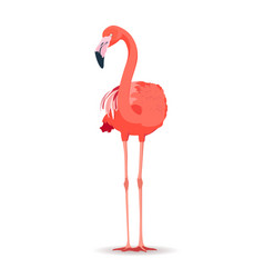 pink flamingo on white background vector image