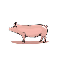 Realistic pig isolated on white background pink vector