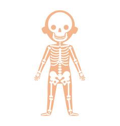 boy body anatomy with skeleton system vector image