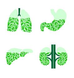 human organs healthlife vector image