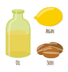 Argan fruit oil nuts seeds for herbal cosmetics vector
