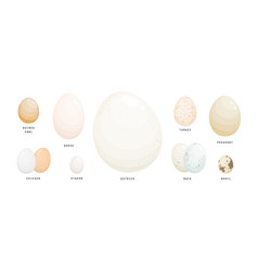 collection of eggs of various farm birds covered vector image