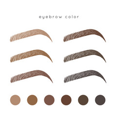 eyebrow color vector image