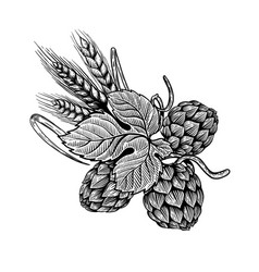 Hop and wheat in engraving style design element vector
