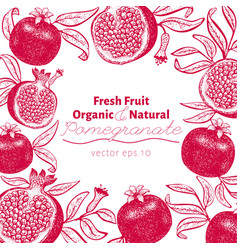 pomegranate fruit design template hand drawn vector image