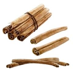 Watercolor spice cinnamon stick vector