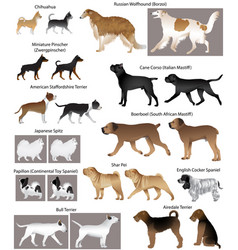 dog show vector image vector image