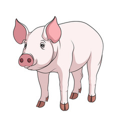 color of a pig vector image