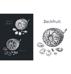 hand drawn jackfruit icons vector image