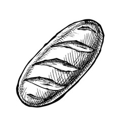 long loaf vector image vector image