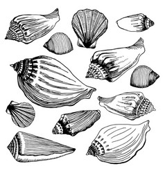 Set of different sea shells hand drawn vector