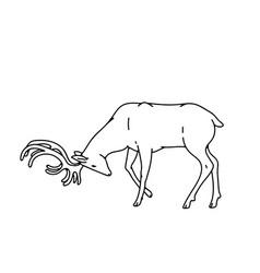 Wild dark deer male buck with branched horns vector