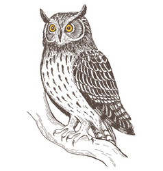 realistic image of owl vector image