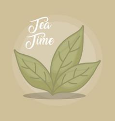 green tea leaves design vector image