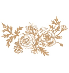 roses hand-drawn s vector image