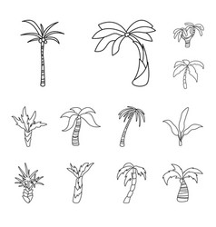 tropical and summer icon vector image
