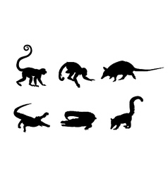Picture of a wild animals vector