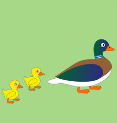 Cartoon duck with ducklings vector