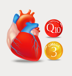 Coenzyme q10 and omega 3 heart vector