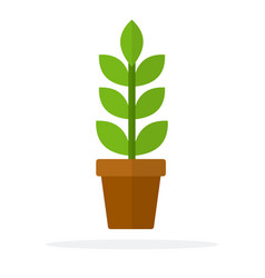home plant with leaves and a stem in a pot flat vector image