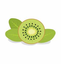 slice of kiwi vector image vector image
