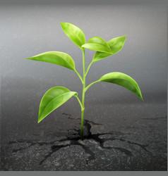Plant sprout through asphalt vector