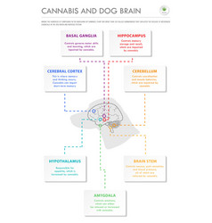 cannabis and dog brain vertical business vector image
