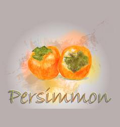 persimmon watercolor food vector image