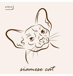 Siamese cat vector image