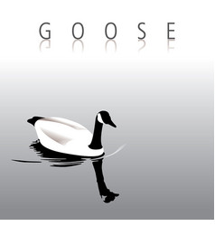a lovely tranquil goose swimming vector image