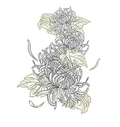 Chrysanthemum flowers vector image