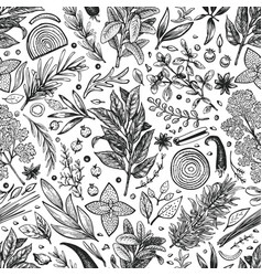culinary herbs and spices seamless pattern vector image