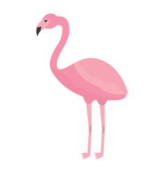 pink flamingo exotic bird decorative flat design vector image