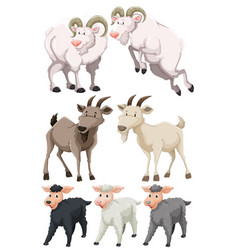 set of goats and sheep vector image