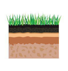soil layers with grass vector image