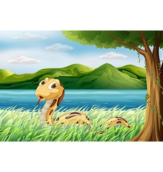 A snake at the grass vector image vector image