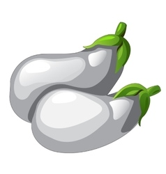 Two white eggplants picked from garden vector image vector image