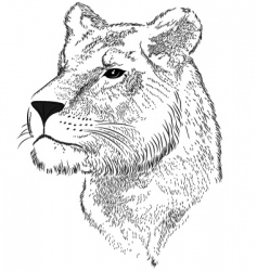 vector face of a lioness vector image vector image
