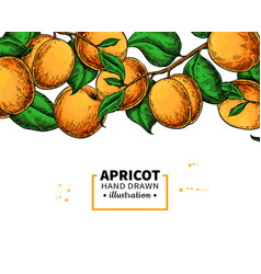 apricot branch border hand drawn isolated fruit vector image