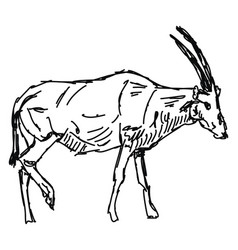 Oryx drawing on white background vector