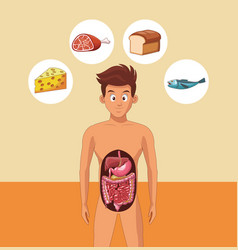 Young man digestive system vector