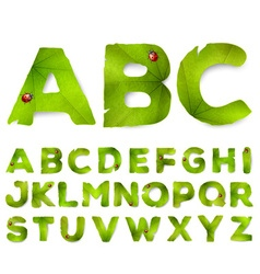alphabet letters made from green leaves vector image