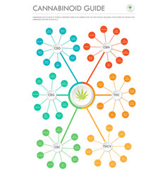 cannabinoid guide vertical business infographic vector image