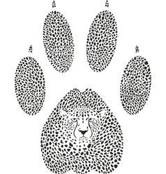 cheetah footprint vector image